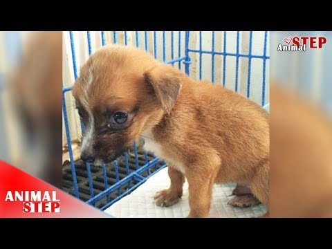 Sick Orphaned Puppy Rescued and Found a Sweet Loving Home