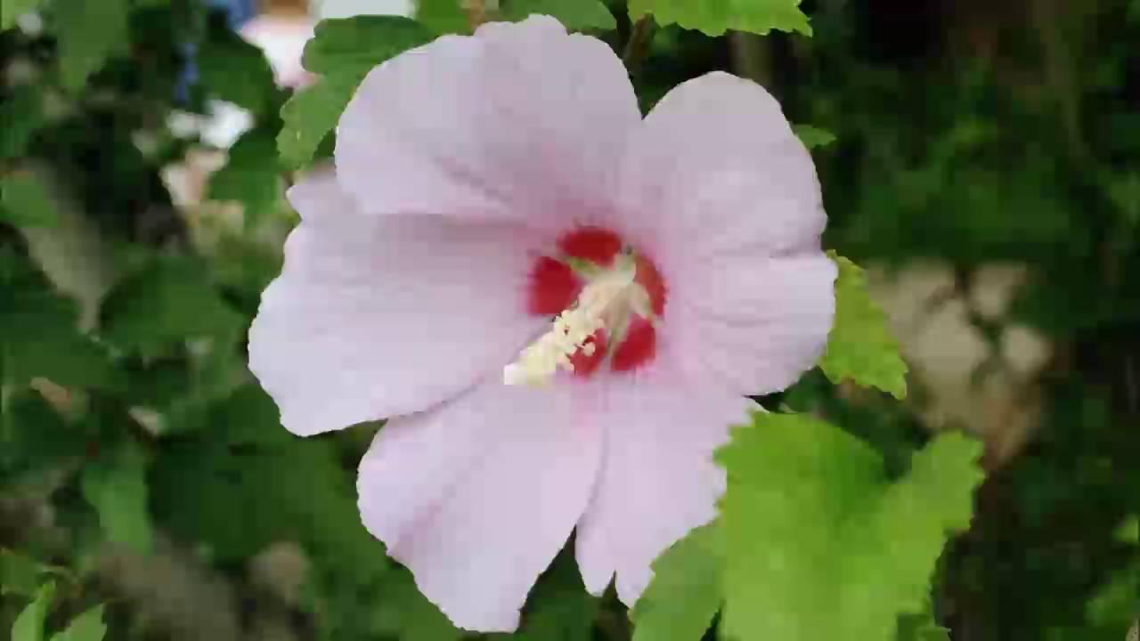 Soft Flower Girl Harmonic Beat Genital Conversion Penis To -7704
