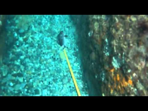 Pole spear fishing then lost my last fish