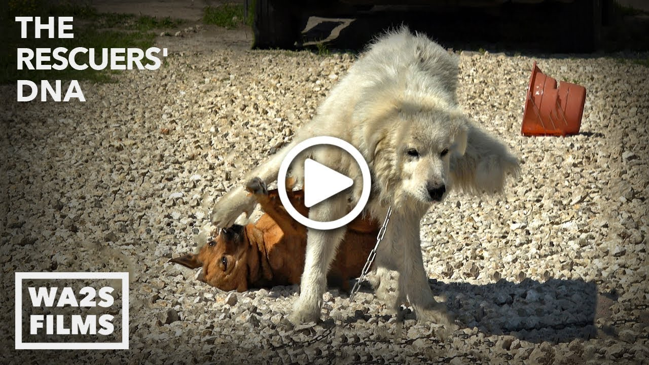 ada88f5c Big Boy Dog Drags Girl Dog with His WHAT?!? You Won't Believe It! - Hope  For Dogs | My DoDo