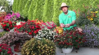 Plants and Flowers - 2012 Standout Performers: Part 2