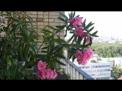 Открытки Весна - All About Happy Life