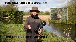 Searching for otters