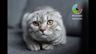 """Выставка кошек """"Кэтсбург"""" 2019 - Москва Онлайн // Прямой Эфир"""