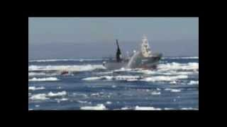 Sea Shepherd 2011, Chasing Japanese whalers in Antartica