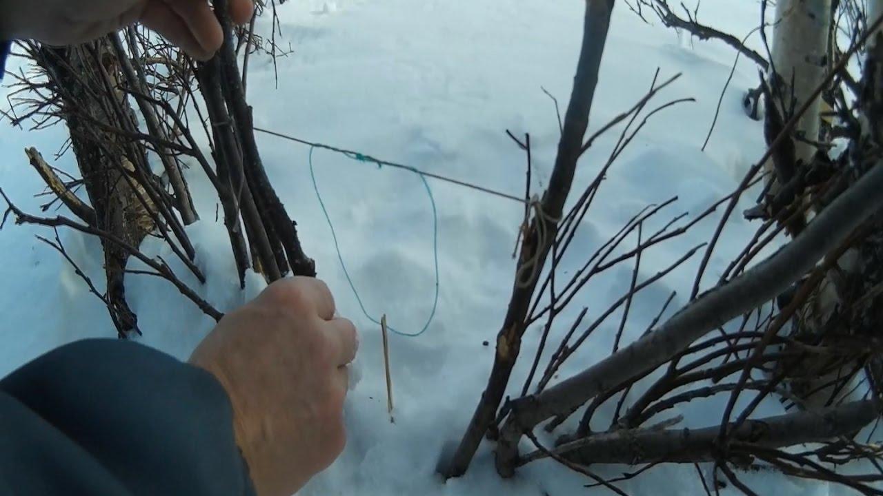 Охота на зайца с помощью капкана и ловушек