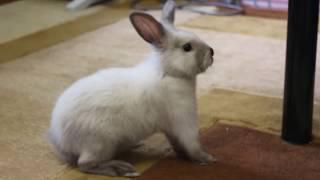 Как ХОМКИ назвали кролика