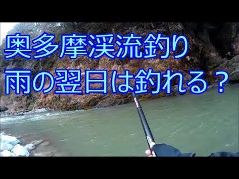 渓流釣りで、雨の翌日が本当に釣れるのか奥多摩川へ釣りに行ってみた(奥多摩川、氷川キャンプ場)