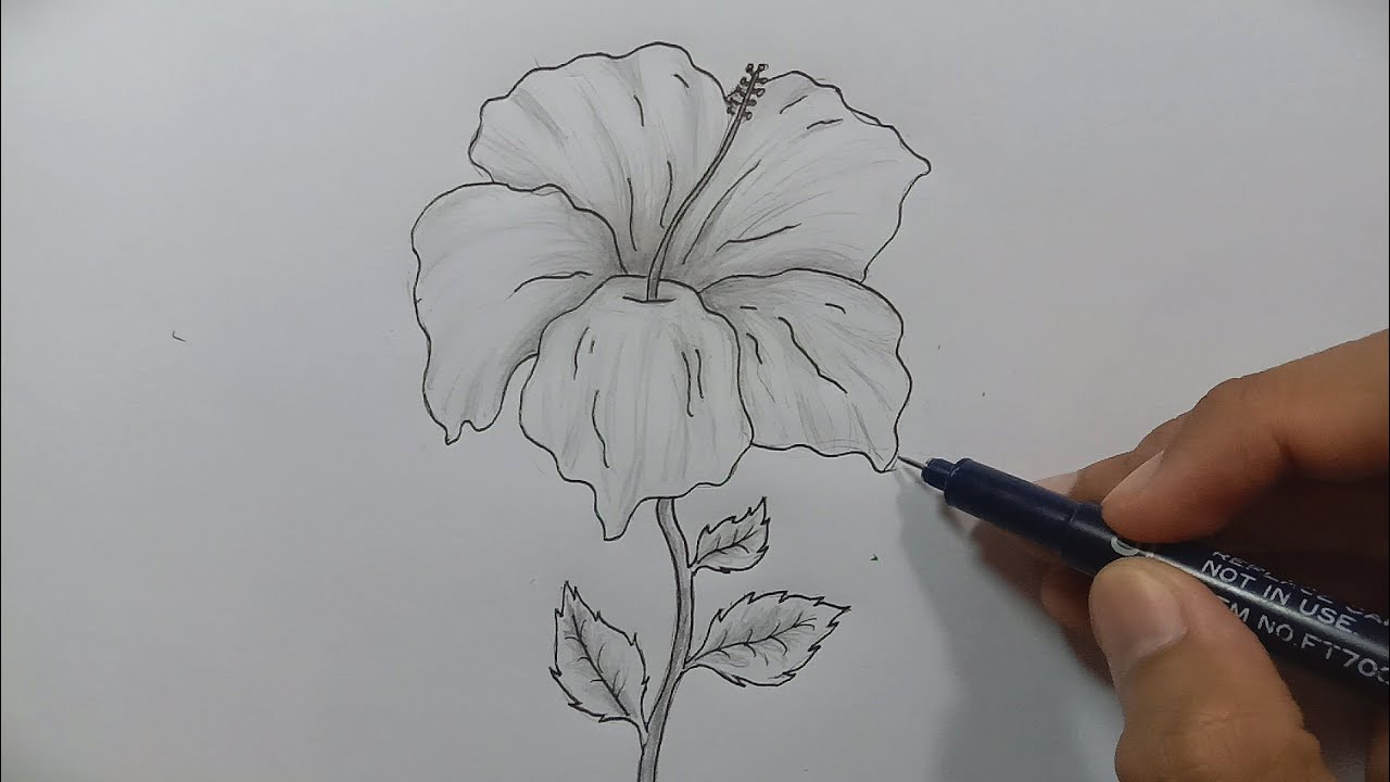 Cara Menggambar Bunga Sepatu Yang Mudah Youtube