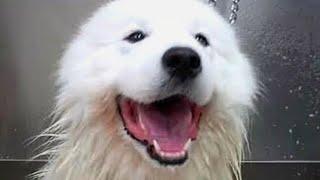 Today I groomed a very loud Polar Bear