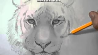 как нарисовать тигра(, 2016-02-07T13:38:36.000Z)