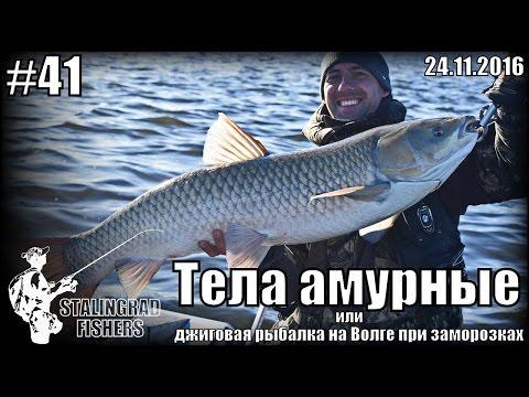 Тела амурные или джиговая рыбалка на Волге при заморозках - 24.11.2016
