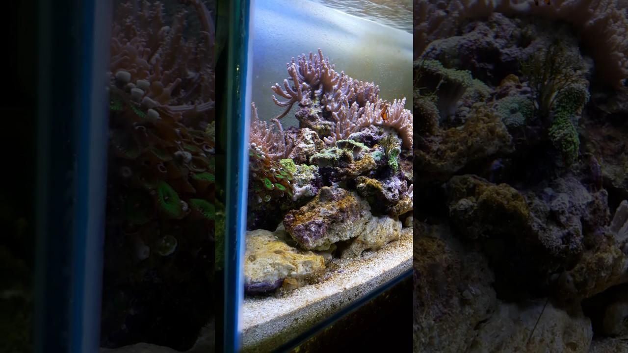 Avec nouvelle lampe led sera marine blue sunrise 820 youtube parisarafo Images