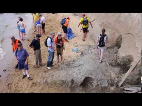 Prehistoric Find Along Calvert Cliffs - YouTube