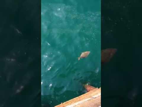 Malibu Pier Fishing 2017