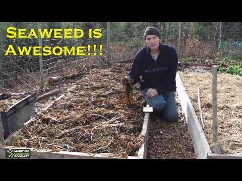 Seaweed Makes A Fantastic Mulch!