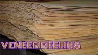 Лущение березового шпона. Peeling of birch veneer. Eng sub