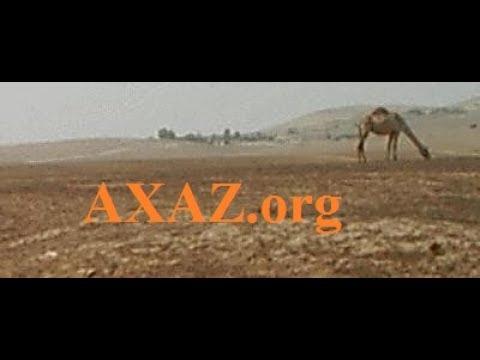 440. Загадка про кошек- на легком иврите