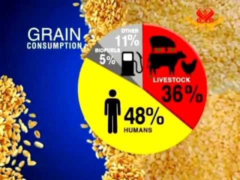 World hunger and Food for livestock
