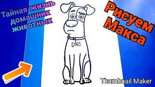 Как нарисовать собачку Макса из мультфильма ТАЙНАЯ ЖИЗНЬ ДОМАШНИХ ЖИВОТНЫХ 2,ПОЭТАПНО/Draw max's dog