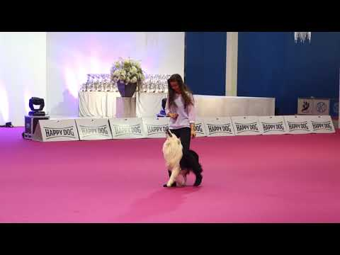 Dog Dance Winter Show Nitra 2018 - Freestyle 1 Kiowa