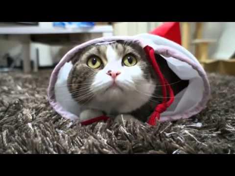 Кот когда делать нечего