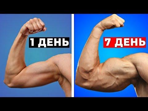 Как стать мускулистым