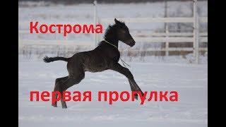 Поскакушки юной Костромы (Маквин-Кармен) клип