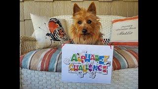 Alphabet Challenge with Maddie the Australian Terrier