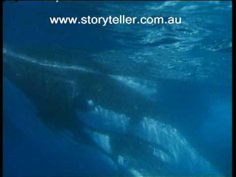 Part 1 Shark Bay | Storyteller Media