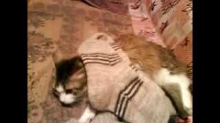 Кошка кайфует от носков.