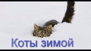 Коты зимой: кошки и кошки исследуют снег