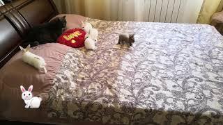 Декоративные кролики и кот