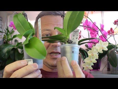 ОРХИДЕИ КАК ВЫБРАТЬ В МАГАЗИНЕ // мои новинки орхидей из Леруа Мерлен