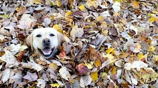 「この遊び、やっべぇぞ!」落ち葉の山にテンションMAXのワンコ