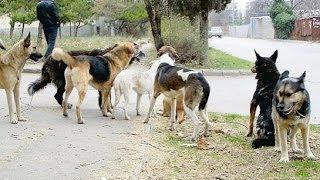 Я выжила благодаря собакам (полный выпуск) | Говорить Україна