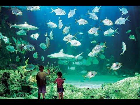Sydney Sea Life Aquarium 2019