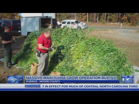 Busted marijuana operation worth millions, Moore County sheriff says