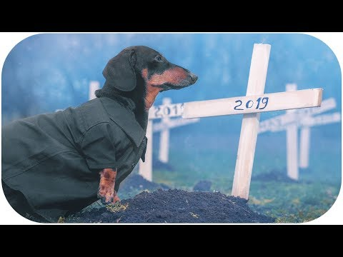 Toys Cemetery! Cute & funny dachshund dog video!