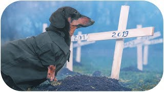 cemetery-of-favorite-toys-spooky-funny-dachshund-dog-video-halloween-2019
