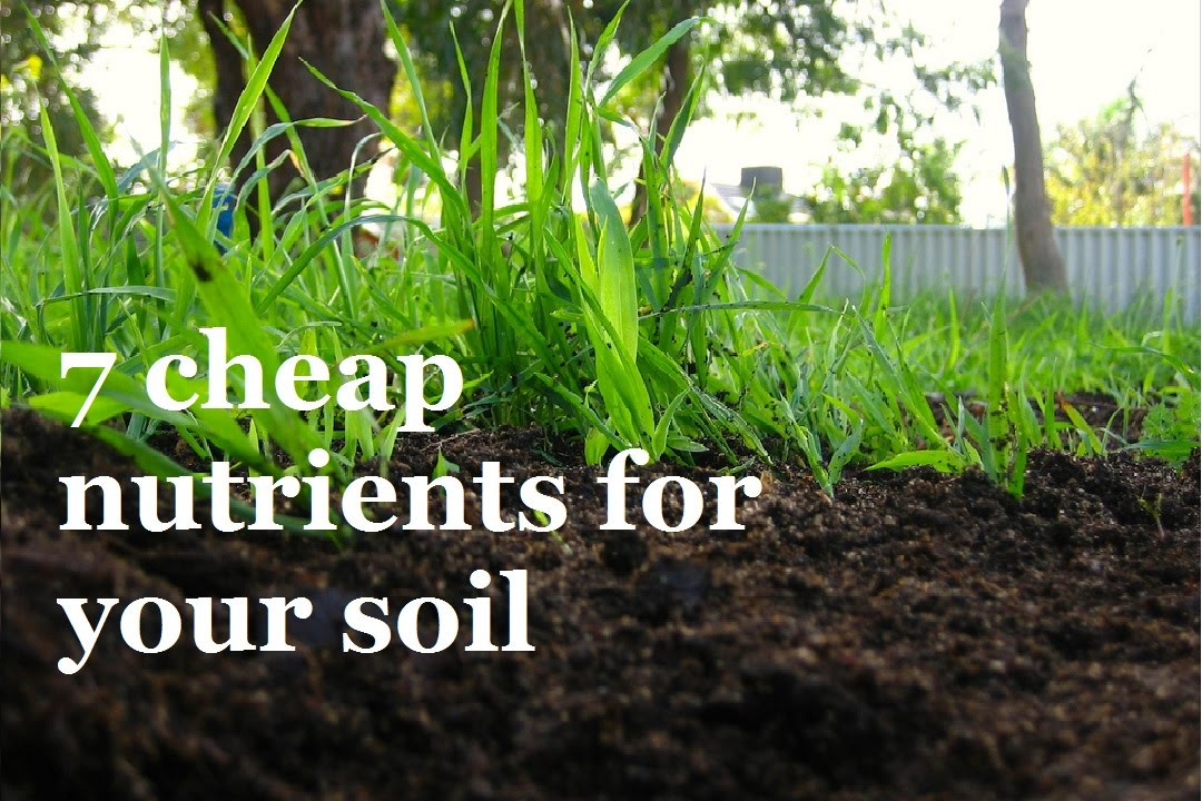 7 super cheap ways to add nutrients to your soil youtube for Soil nutrients