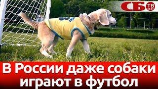В России даже собаки играют в футбол
