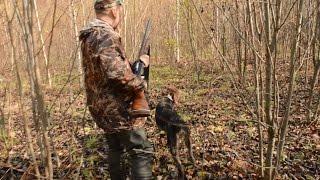 Охота на вальдшнепа с легавой собакой осенью
