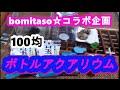 bomitaso☆コラボ企画 100均アクアリウム【メダカののどかな休日】