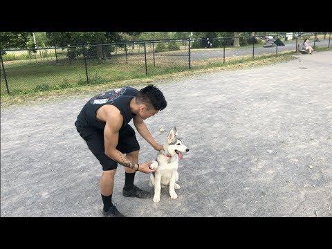 My FIRST Puppy, Kai The German Shepherd Husky | 10