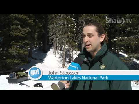 Wateron welcomes guests to stay at the newly renovated Cameron Lake Cabin