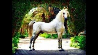 تعرف علي سر نفوق حصان مصري ب ١٠ مليون دولار