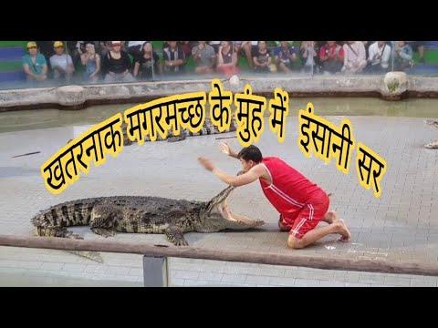 Awesome Crocodile show at sriracha tiger zoo, pattaya, thailand