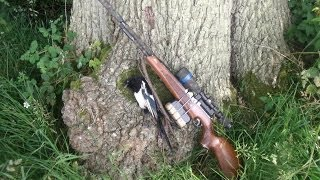 Air Rifle Magpie Hunt Aswell As Setting Up A Squirrel Feeder On My New Pemission