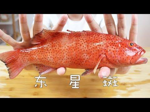 深海貴族東星斑,500多塊錢一條究竟有多好吃?出乎我的意料【奇異小北】